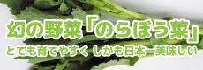幻の野菜「のらぼう菜」